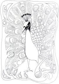 Flourished Peacock
