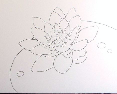 waterlilypattern