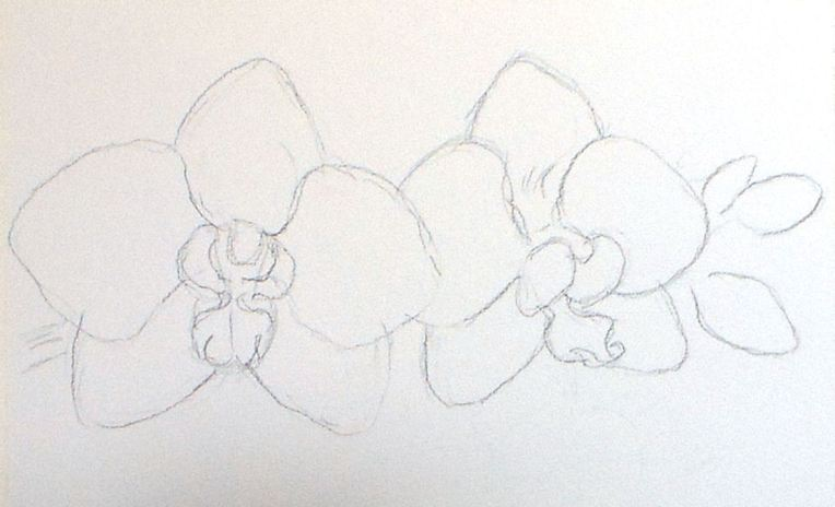 frugalcrafter_orchid_sketch