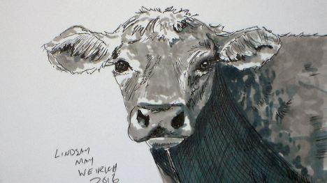 cow_black