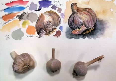 garlicswatchsketch