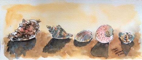 seashellfinal