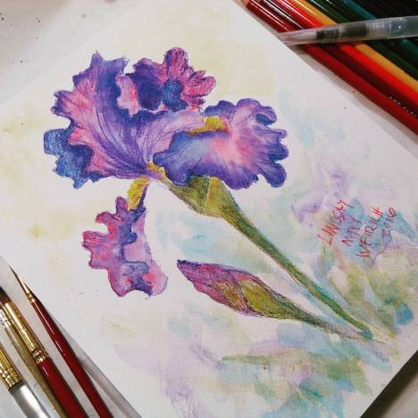 Thefrugalcrafter lindsay weirich 401k subscribers iris watercolor pencil drawing