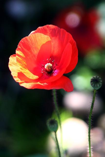 flower-1334636_640