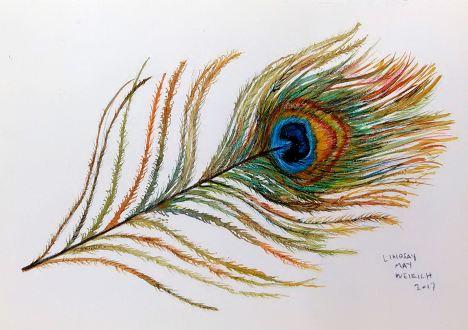 peacockfinal
