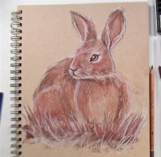 bunny_sketch