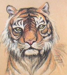tiger_sketch_crop